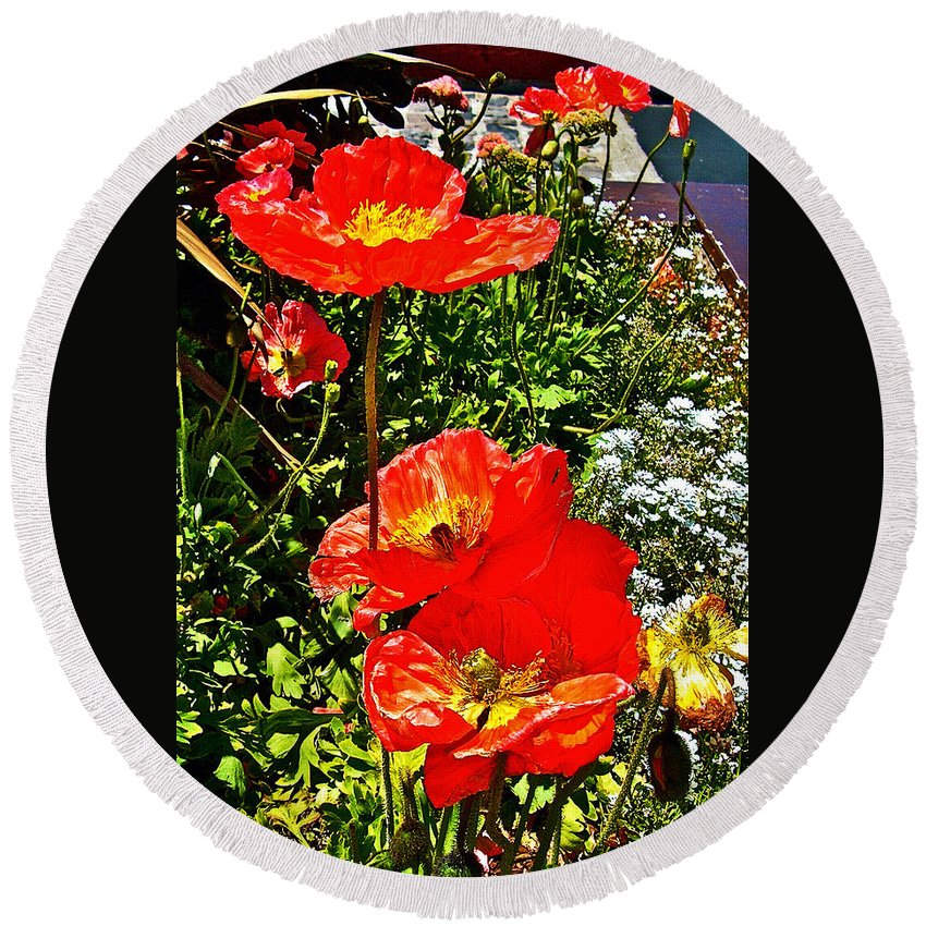 Icelandic Poppies Near Fishermen's Wharf In San Francisco Round Beach Towel featuring the photograph Icelandic Poppies Near Fishermen's Wharf In San Francisco-california by Ruth Hager