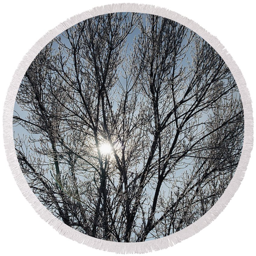 Icy Round Beach Towel featuring the photograph Icy Tree - Winter Morning by Mick Anderson