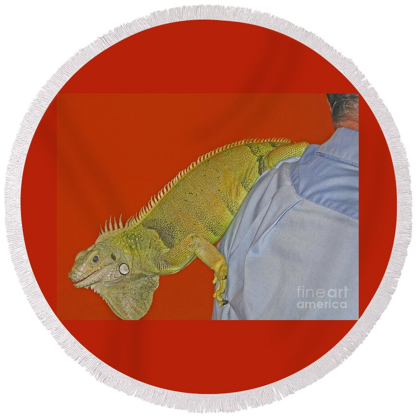 Iguana Round Beach Towel featuring the photograph Iguana By The Tail by Ann Horn