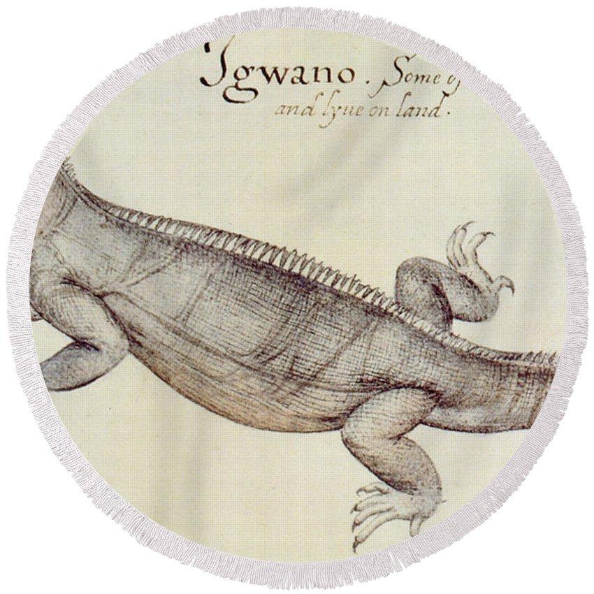 Iguana Round Beach Towel featuring the painting Iguana by John White