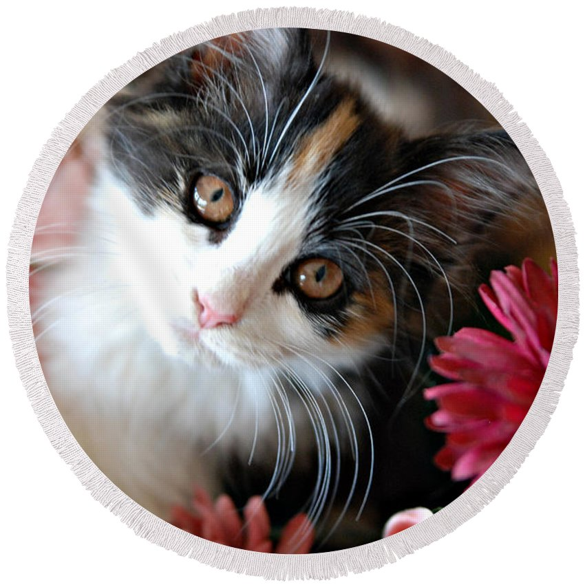 Cats Round Beach Towel featuring the photograph I'm Just So Adorable by Kenny Francis