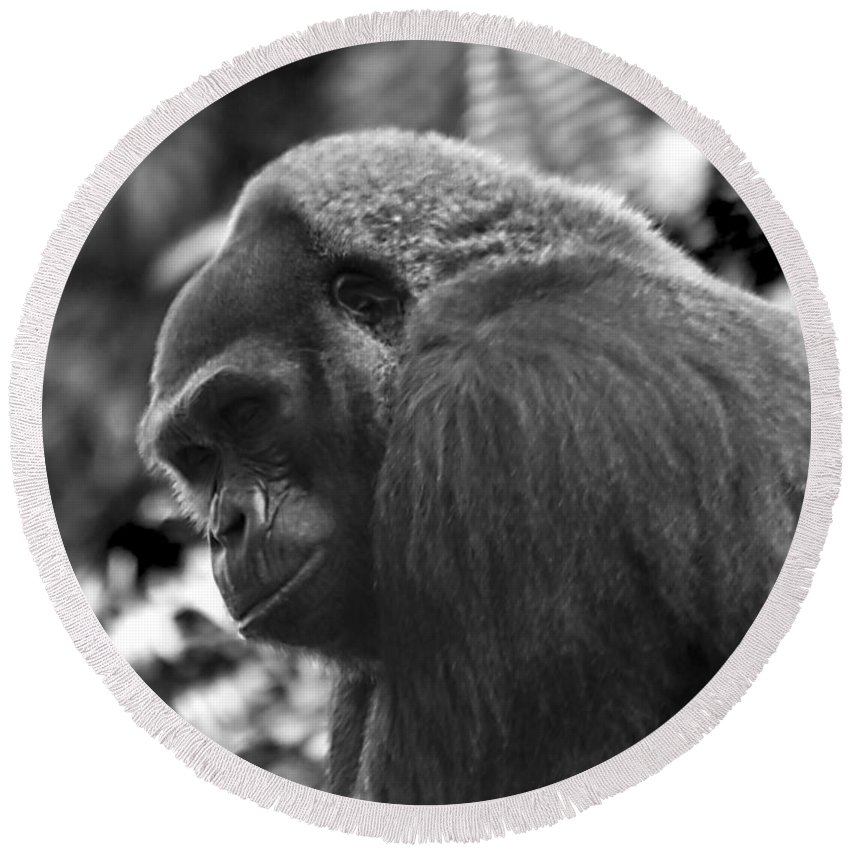 Chimpanzee Round Beach Towel featuring the photograph I'm Leaving by Ken Frischkorn
