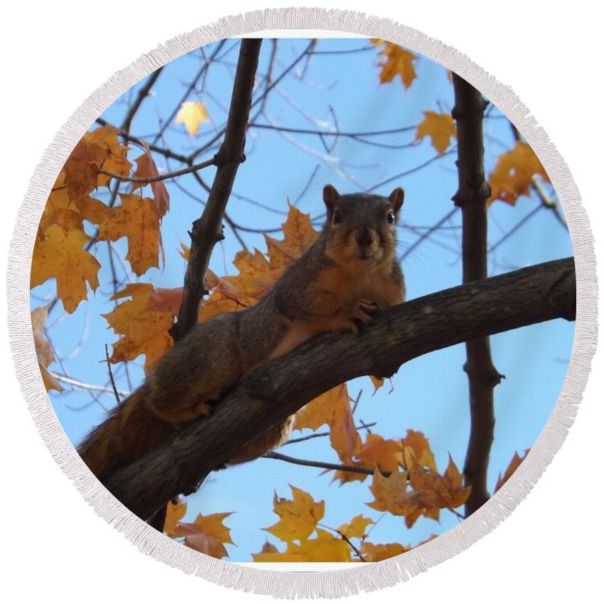 Squirrel Round Beach Towel featuring the photograph I'm Watching You by Sara Raber