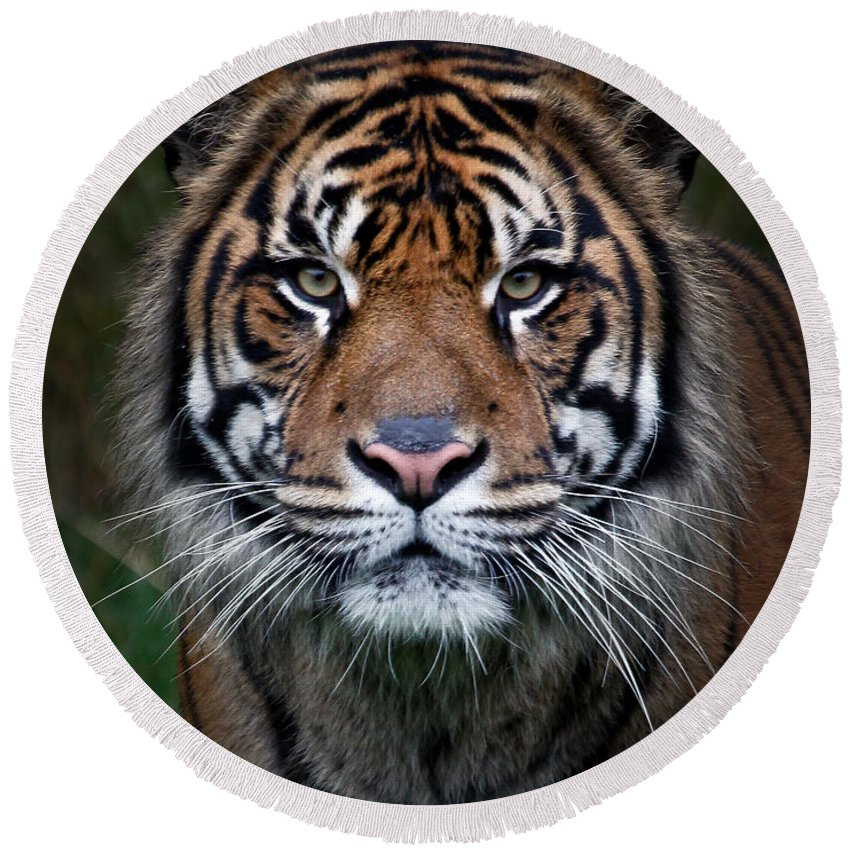Tiger Round Beach Towel featuring the photograph Tiger In Your Face by Athena Mckinzie