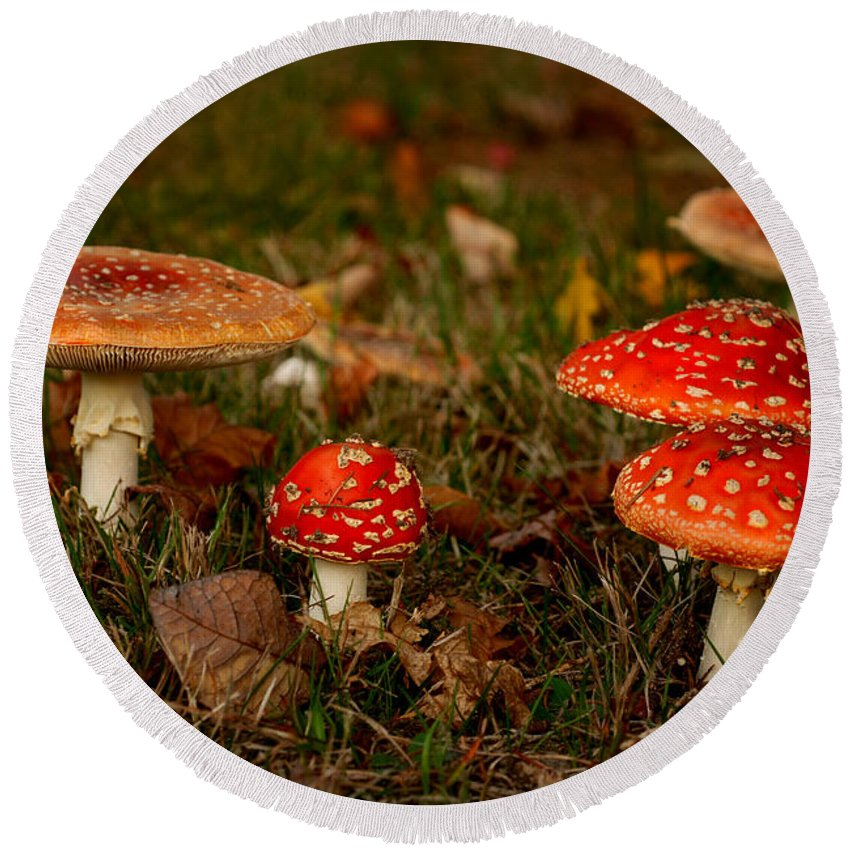 Agaric Round Beach Towel featuring the photograph In The Forest by TouTouke A Y