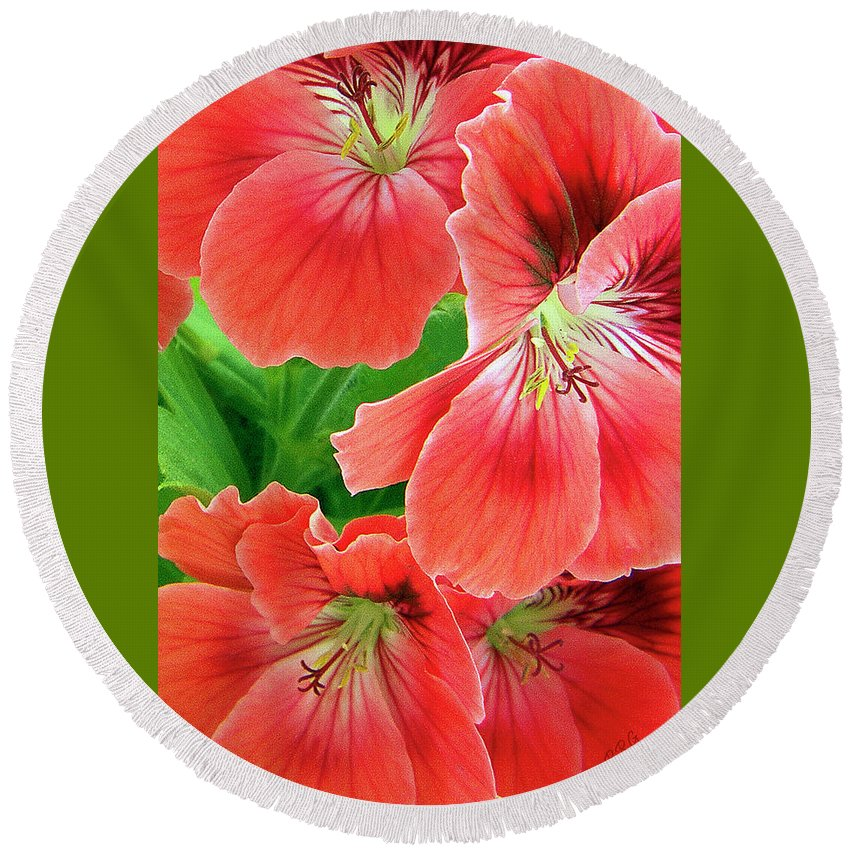 Red Round Beach Towel featuring the photograph In The Garden. Geranium by Ben and Raisa Gertsberg
