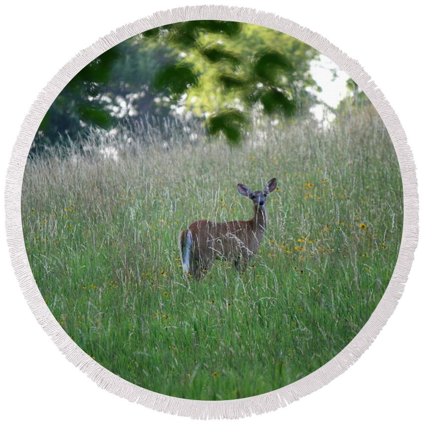 Deer Round Beach Towel featuring the photograph White-tailed Deer In Meadow by Neal Eslinger