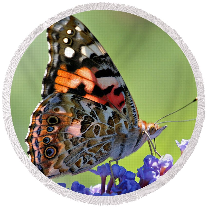 Butterfly Round Beach Towel featuring the photograph In The Sunlight by Sandy Keeton