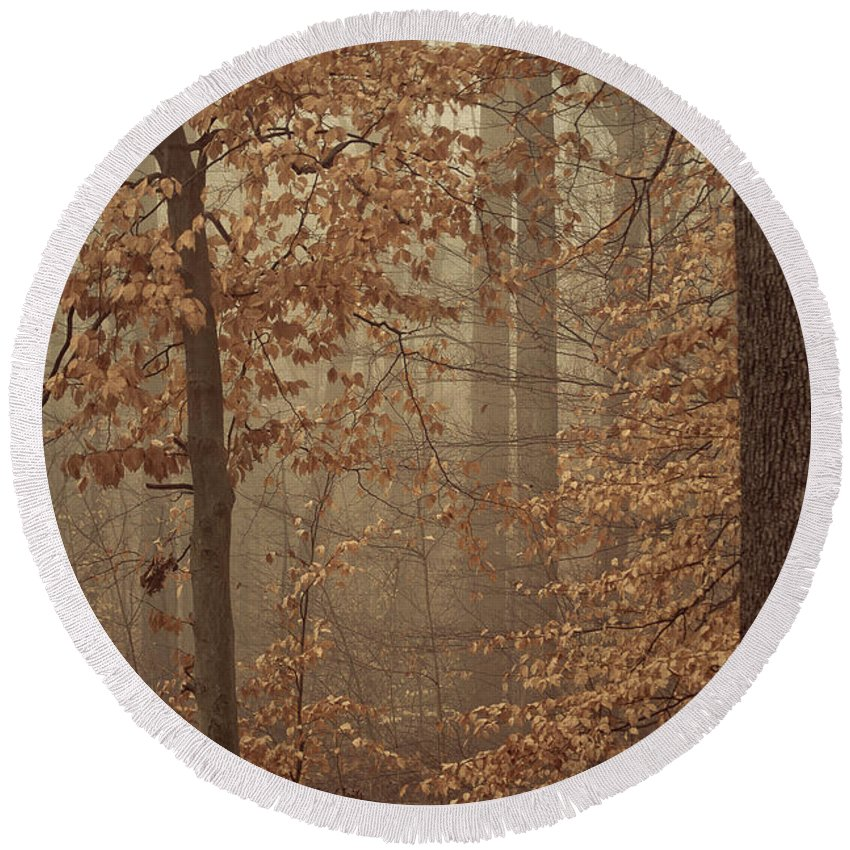 Tree Round Beach Towel featuring the photograph In The Woods by Trish Tritz