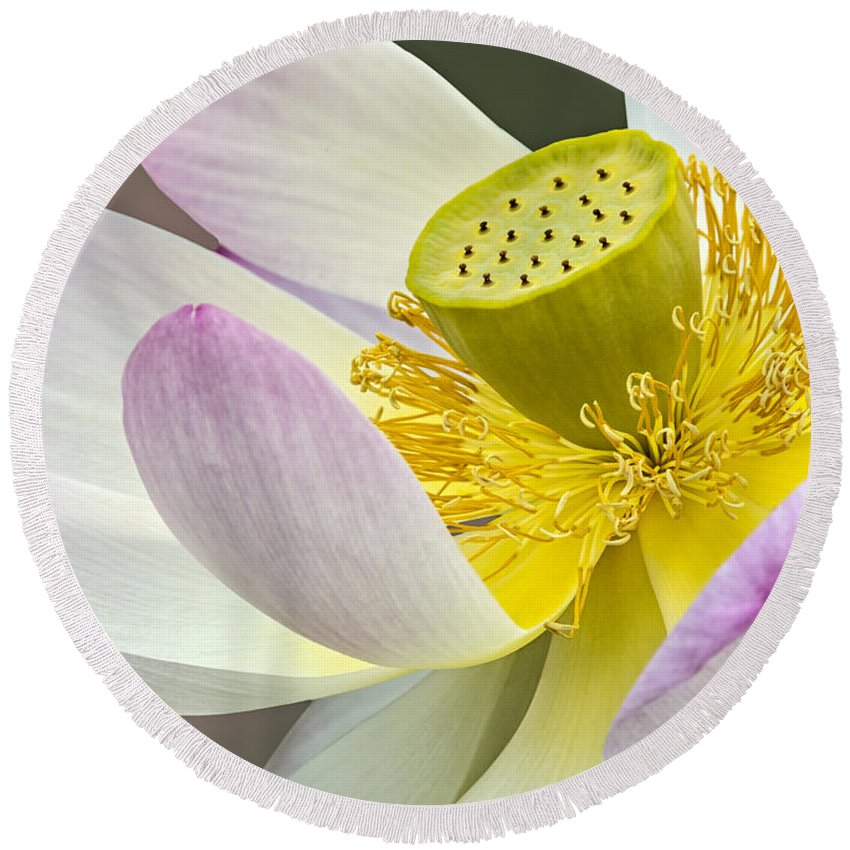 Sacred Lotus Round Beach Towel featuring the photograph Intimate Sacred Lotus Bloom by Susan Candelario