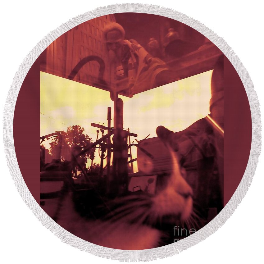 Cat Round Beach Towel featuring the photograph Irie Mechanical 2 by Tamara Michael
