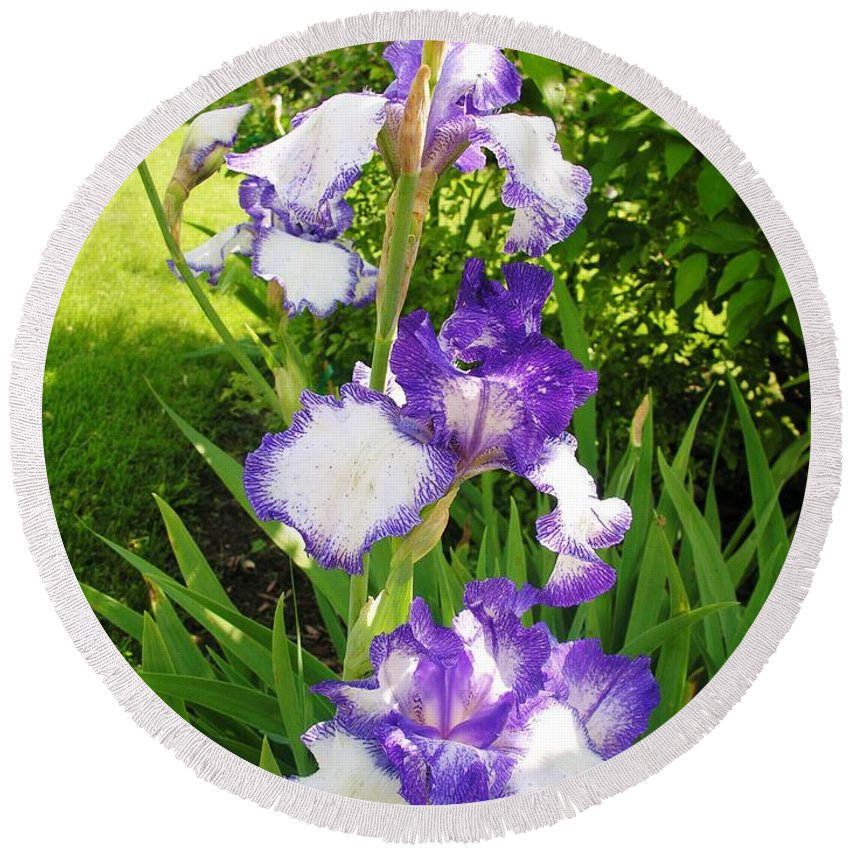 Iris Round Beach Towel featuring the photograph Iris Flowers by Sherman Perry