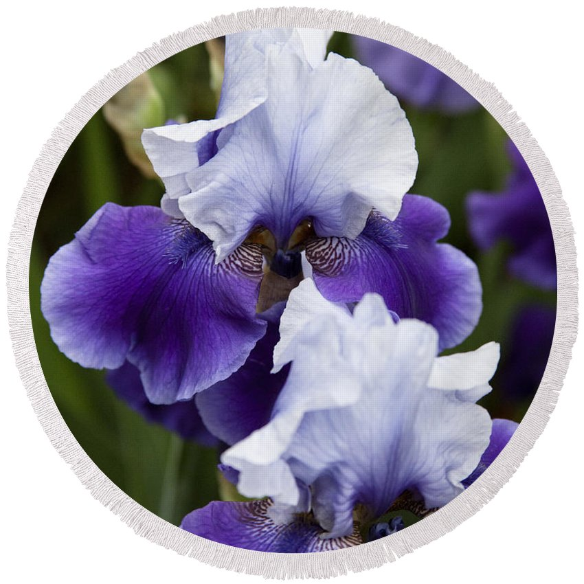 Iris Purple Flowers Photography Round Beach Towel featuring the photograph Iris Purple And White Fine Art Floral Photography Print As A Gift by Jerry Cowart