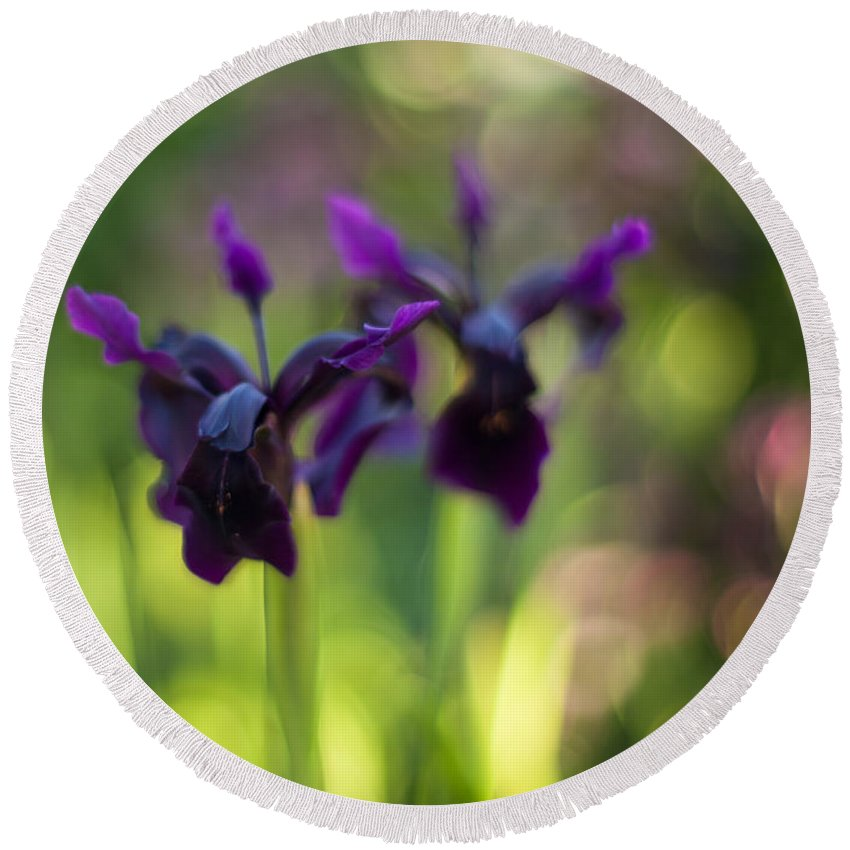 Flower Round Beach Towel featuring the photograph Irises Depth by Mike Reid