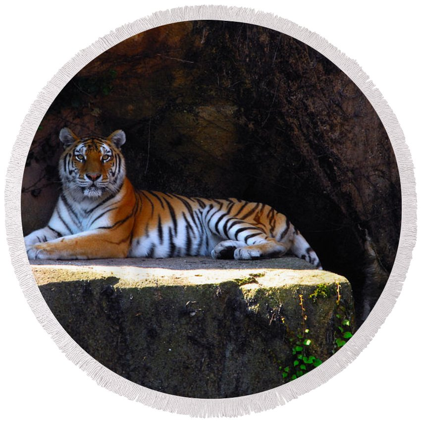Tiger Round Beach Towel featuring the photograph Its Good To Be King by Lynn Bauer