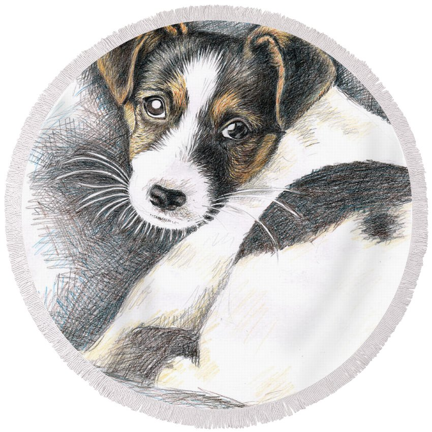 Dog Round Beach Towel featuring the drawing Jack Russell Puppy by Nicole Zeug