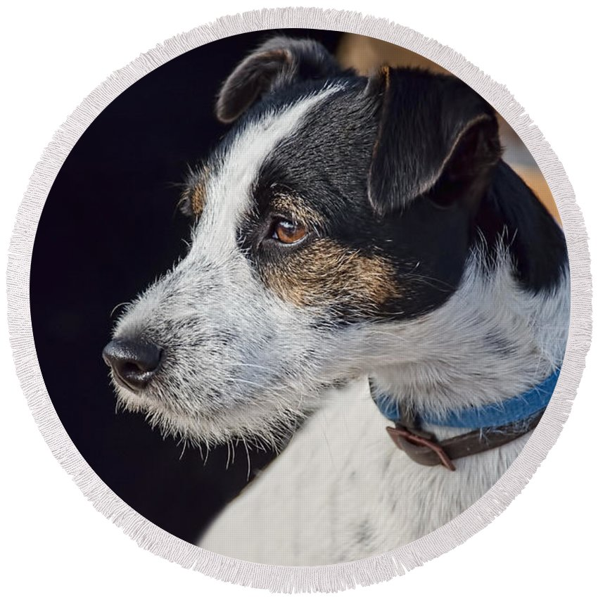 Jack-russell Round Beach Towel featuring the photograph Jack Russell Terrier by Susie Peek