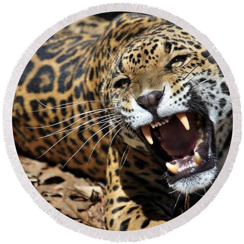 Jaguar Round Beach Towel featuring the photograph Jaguar Intensity by Christopher Miles Carter