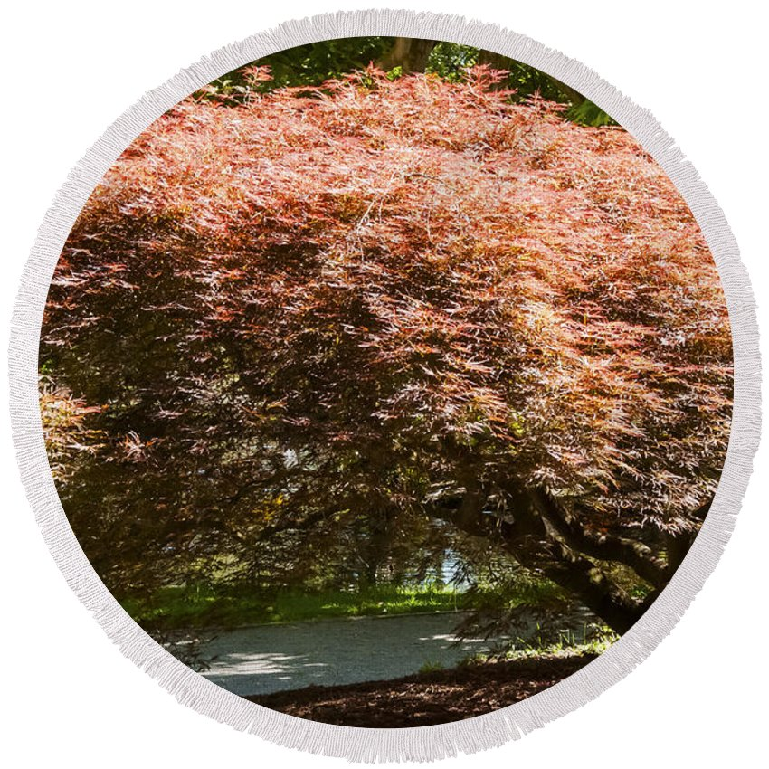 Botanical Gardens Christchurch New Zealand Japanese Maple Tree Trees Limb Limbs Branch Branches Leaf Leaves Round Beach Towel featuring the photograph Japanese Maple by Bob Phillips