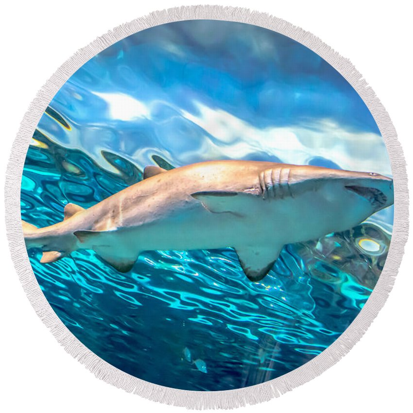 Shark Round Beach Towel featuring the photograph Jaws by Cheryl Baxter