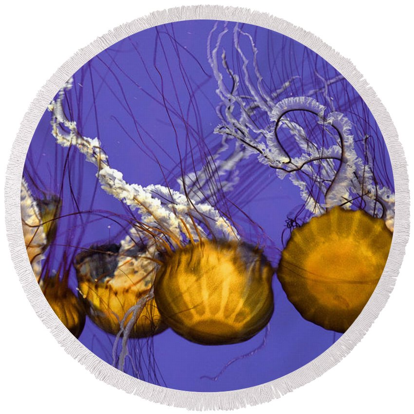 Pacific Sea Nettle Round Beach Towel featuring the photograph Jelly Congregation by Diana Powell