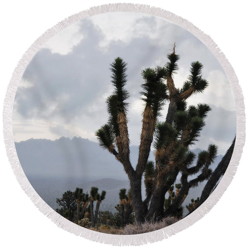 Joshua Tree Round Beach Towel featuring the photograph Joshua Tree Forest Ivanpah Valley by Kyle Hanson