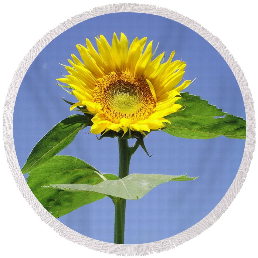 Sunflower Round Beach Towel featuring the photograph Joy by Michelle Welles