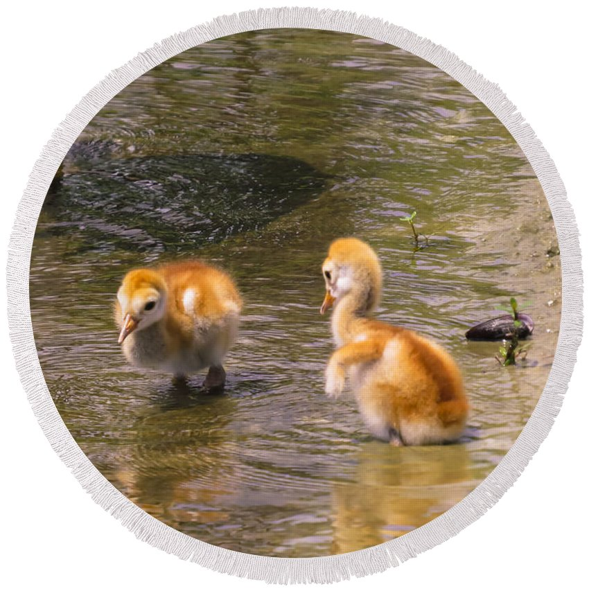 Chicks Round Beach Towel featuring the photograph Jump In. The Water Is Fine by Zina Stromberg