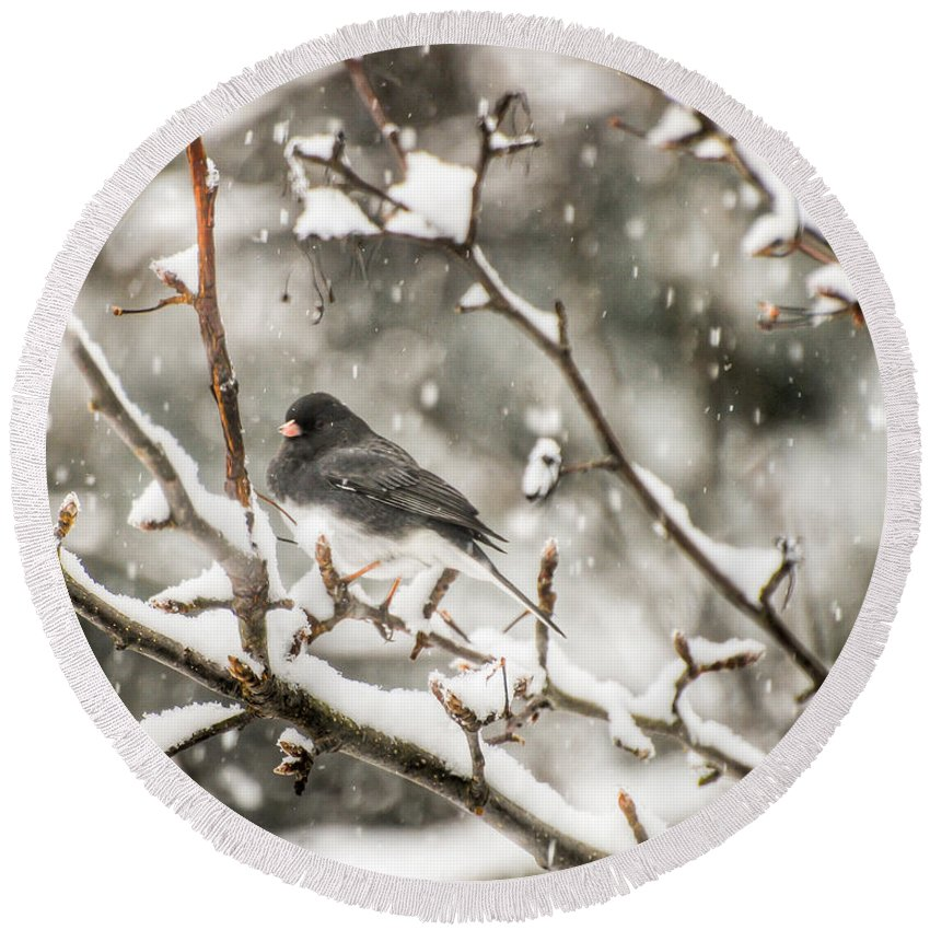 Junco Round Beach Towel featuring the photograph Junco In The Snow by Kerri Farley