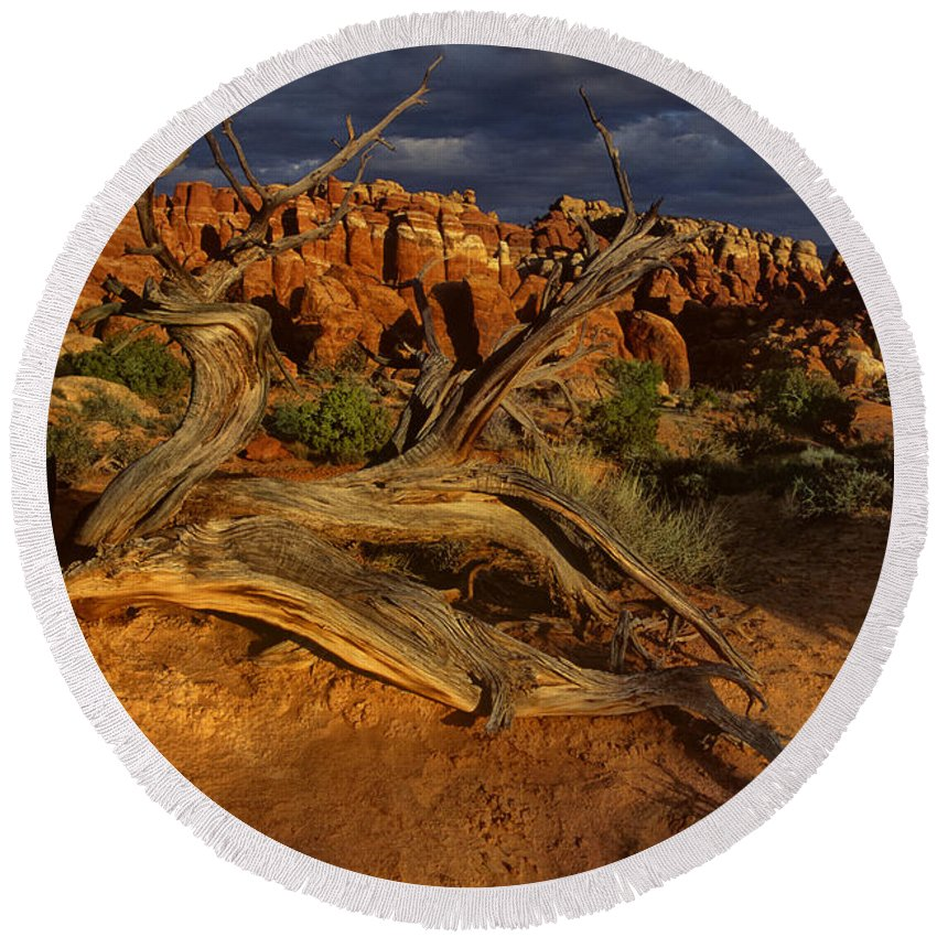 North America Round Beach Towel featuring the photograph Juniper Below The Fiery Furnace Arches National Park by Dave Welling