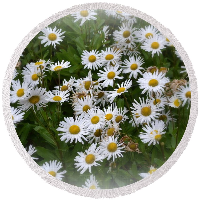 Daisy Round Beach Towel featuring the photograph Just Daisies by Miriam Danar