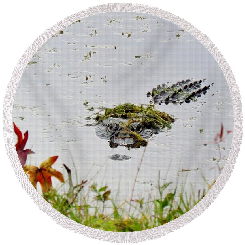Alligator Round Beach Towel featuring the photograph Just Hanging Out by Cynthia Guinn
