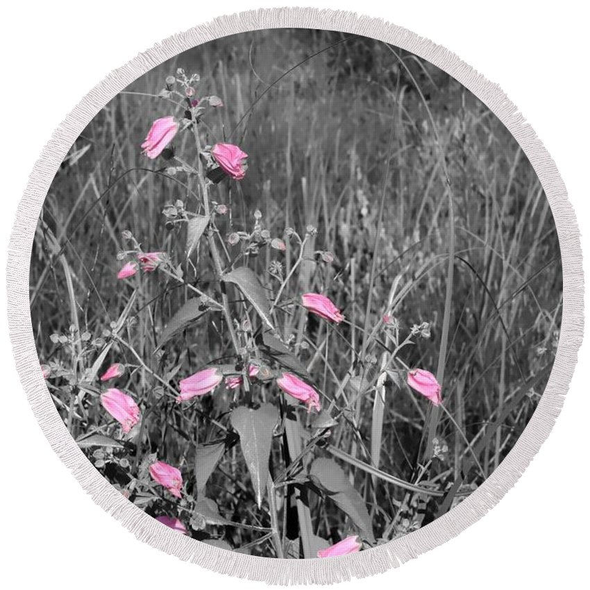 Wildflowers Round Beach Towel featuring the photograph Just Pink by Debra Forand