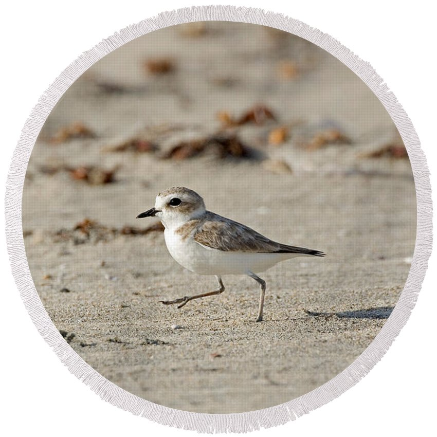 Fauna Round Beach Towel featuring the photograph Kentish Plover by Anthony Mercieca