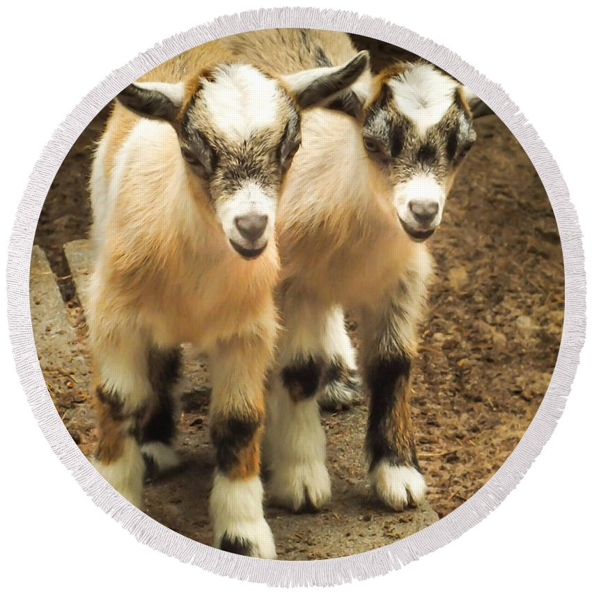 Baby Goats Round Beach Towel featuring the photograph Kids One And Two by Karen Wiles