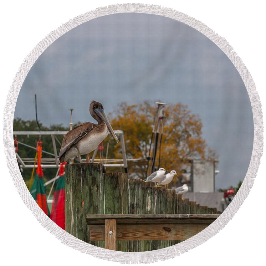 Pelican Round Beach Towel featuring the photograph King Pelican by Dale Powell