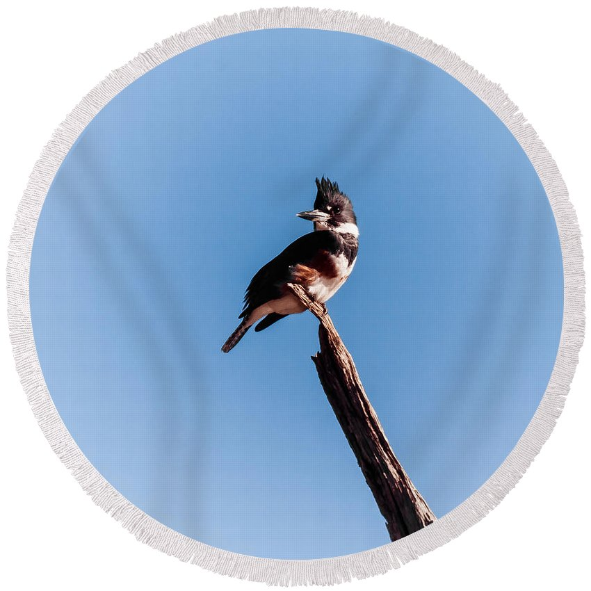 Animal Round Beach Towel featuring the photograph Kingfisher On Dead Tree by Robert Frederick
