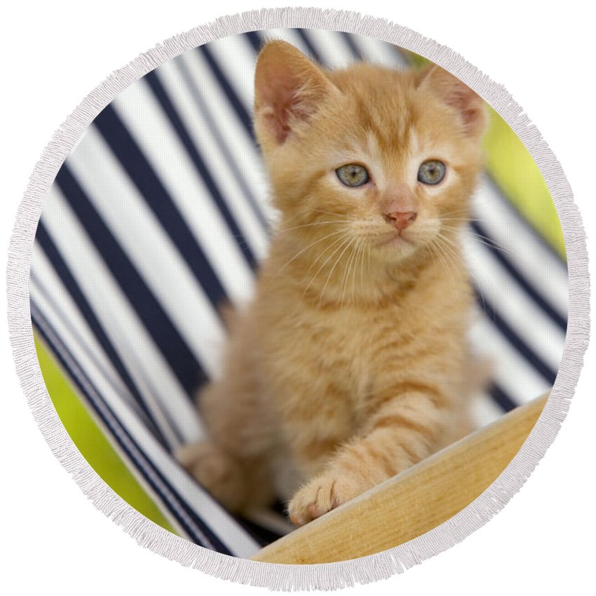 Cat Round Beach Towel featuring the photograph Kitten On Chair by Jean-Michel Labat