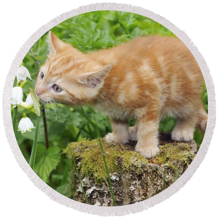 Cat Round Beach Towel featuring the photograph Kitten With Flowers by John Daniels