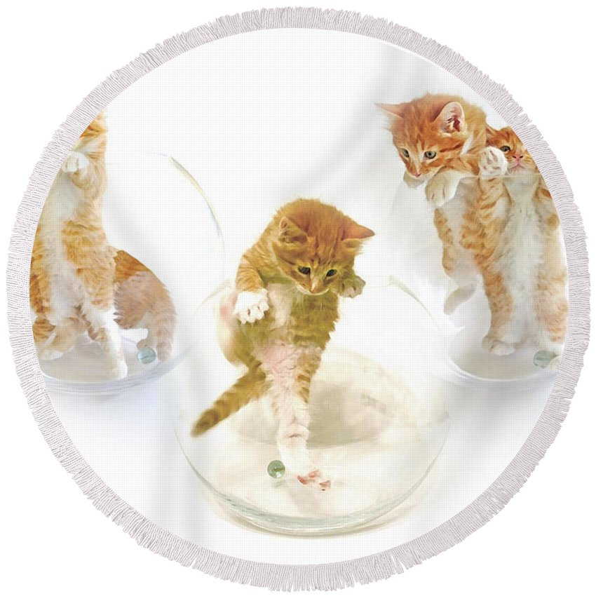 Kittens Round Beach Towel featuring the photograph Kittens In Bowl by Olivia Novak