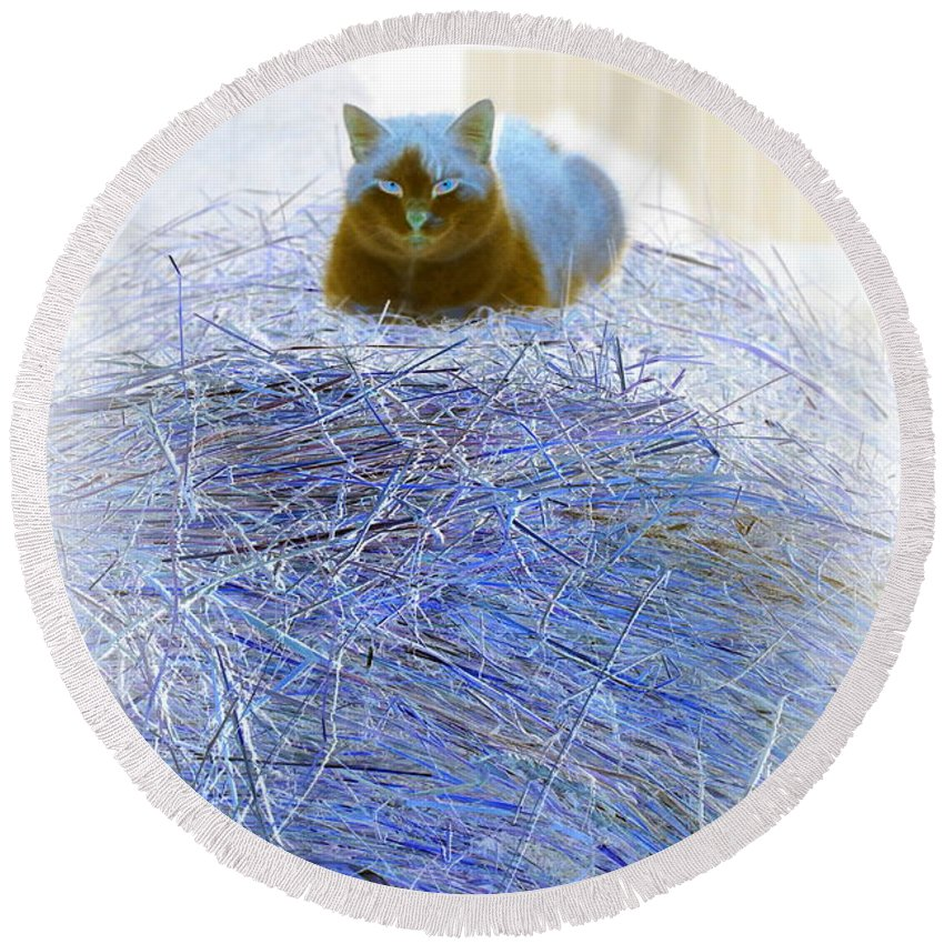 Cat Round Beach Towel featuring the photograph Kitty Blue IIi by Kathy Sampson
