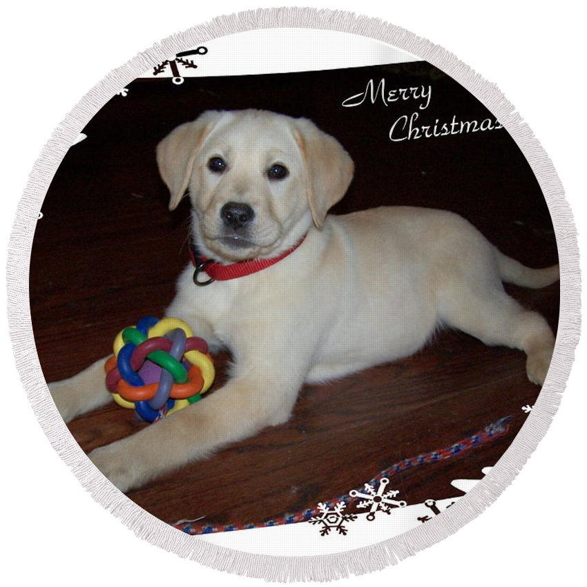 Christmas Round Beach Towel featuring the photograph Lab Pup Merry Christmas by Joyce Dickens
