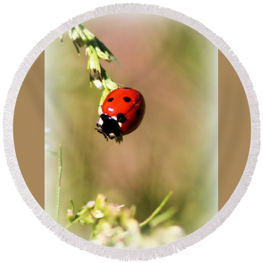 Insect Round Beach Towel featuring the photograph Lady Bug by Travis Truelove