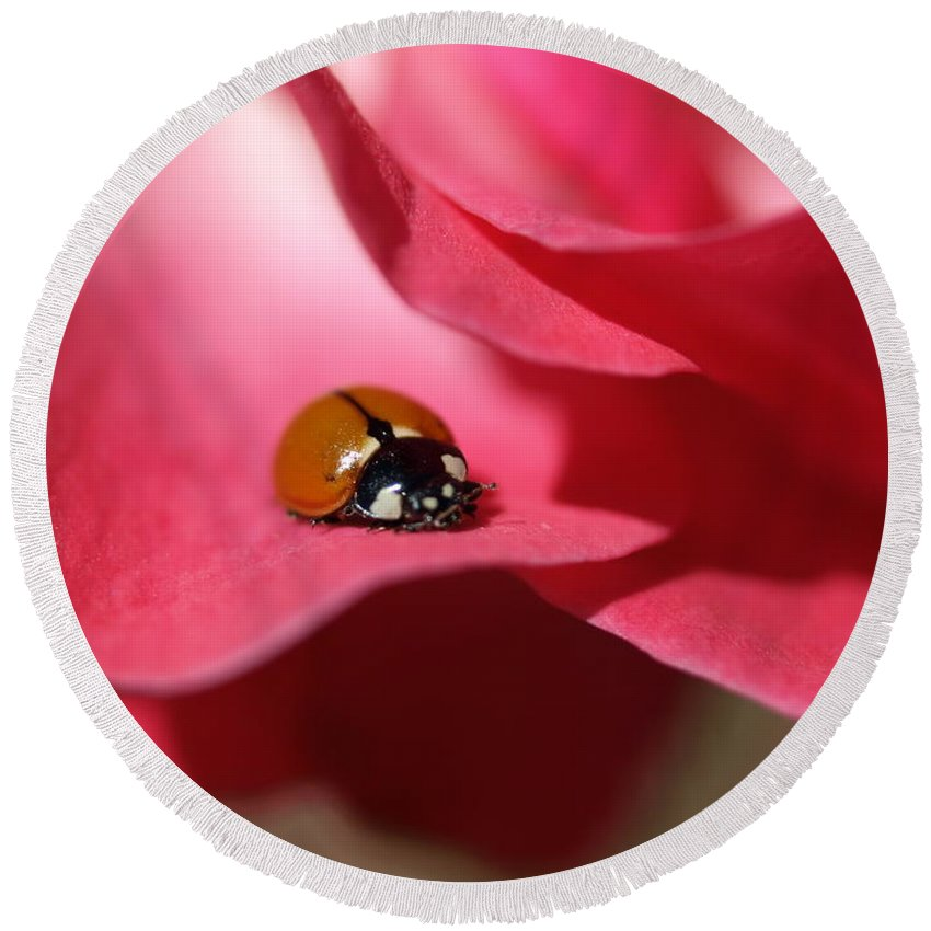 Ladybug Round Beach Towel featuring the photograph Ladybug by Jacklyn Duryea Fraizer