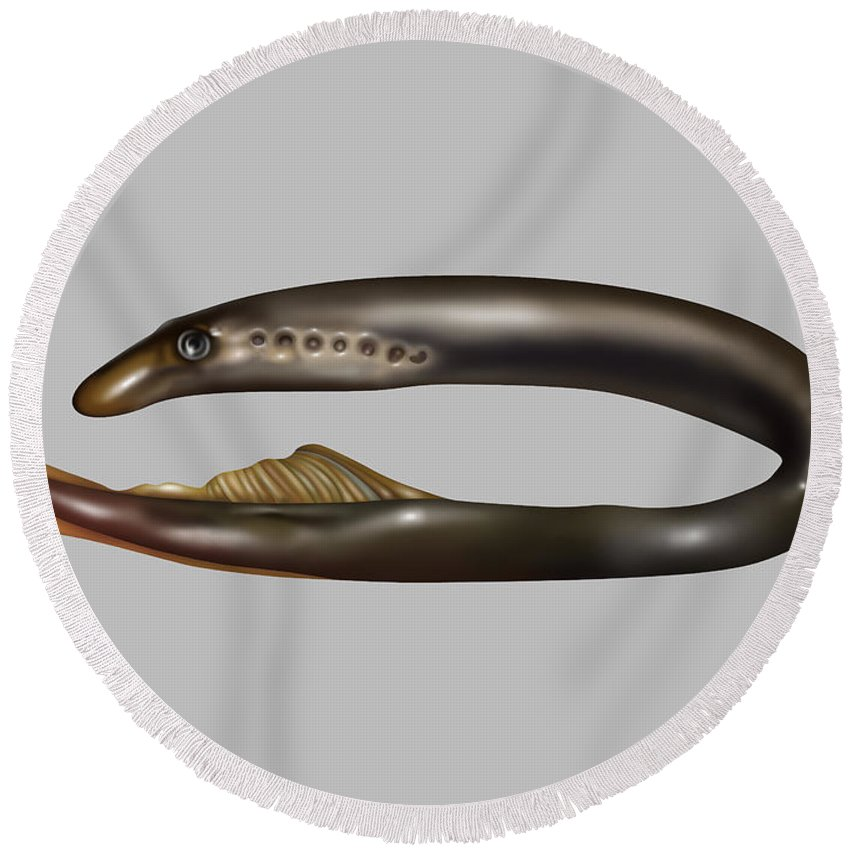 Nature Round Beach Towel featuring the photograph Lamprey Eel, Illustration by Gwen Shockey