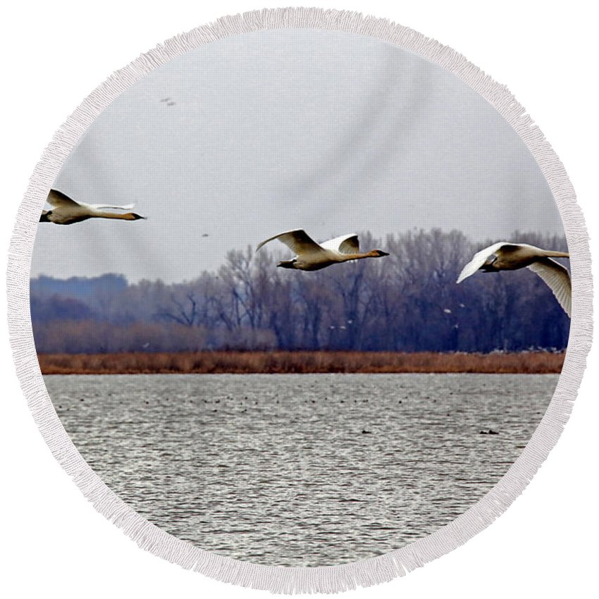 Geese Round Beach Towel featuring the photograph Landing by Lynn Sprowl