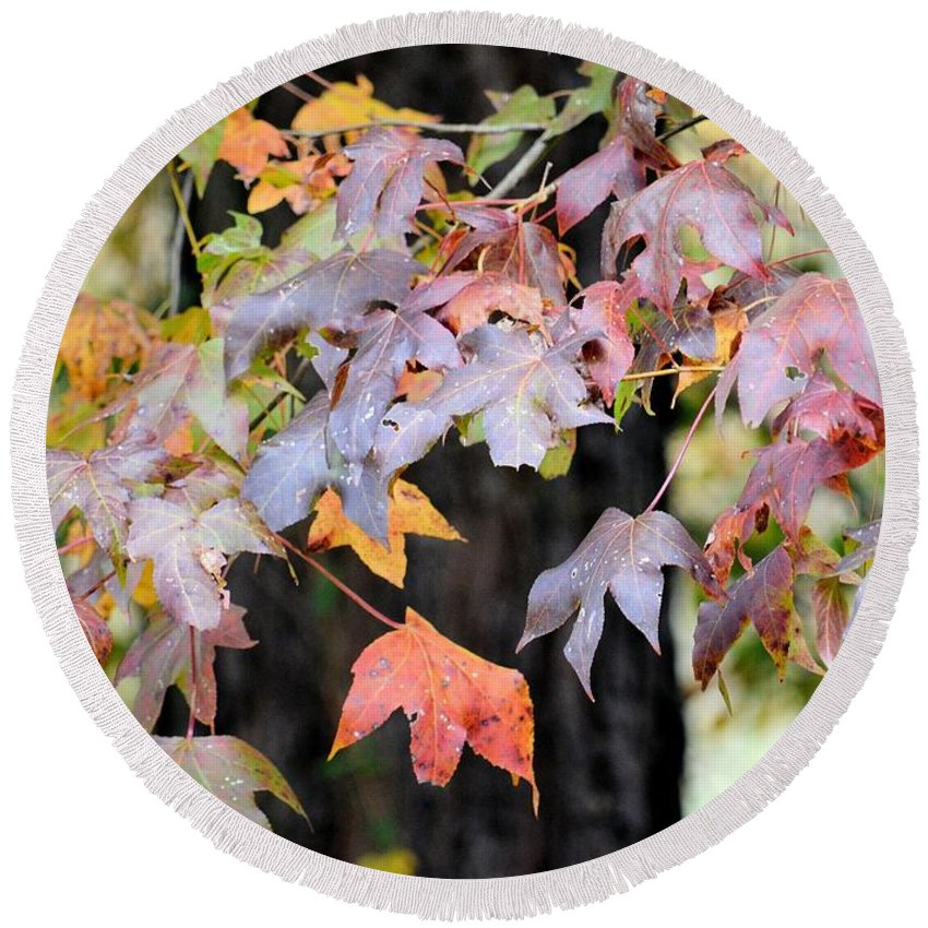 Late Autumn Maples Round Beach Towel featuring the photograph Late Autumn Maples by Maria Urso