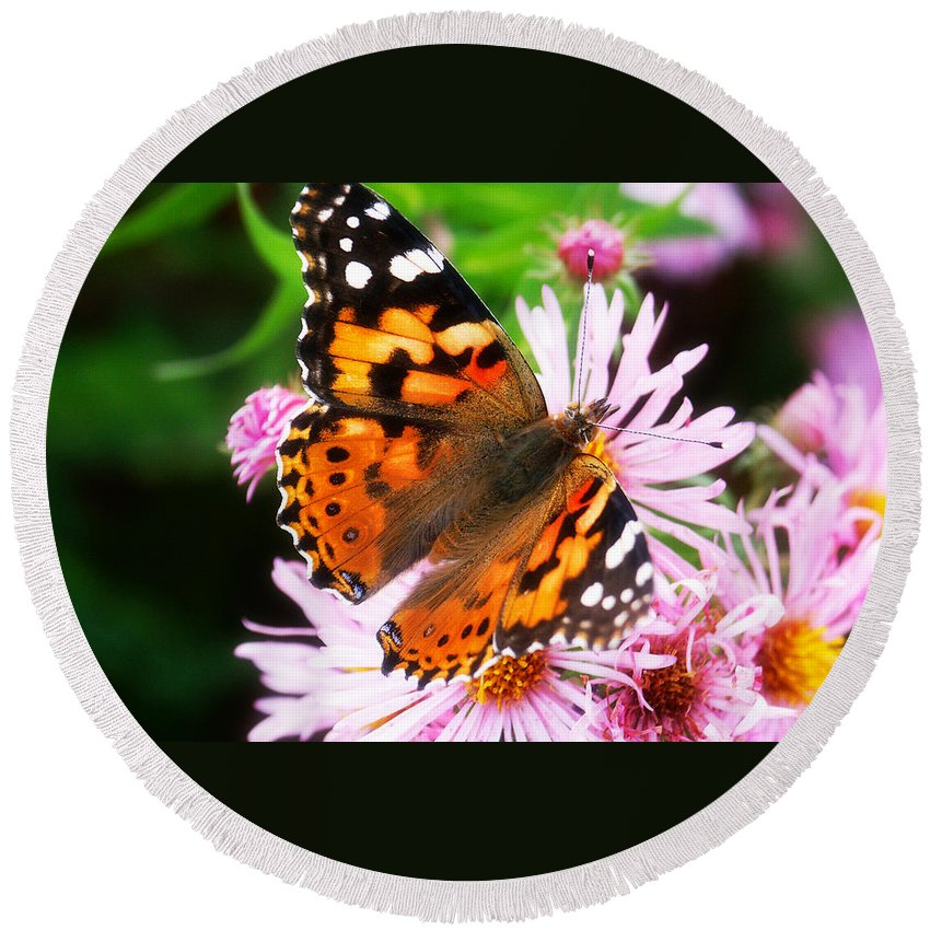 Flower Round Beach Towel featuring the photograph Late Summer Painted Lady by Marilyn Hunt