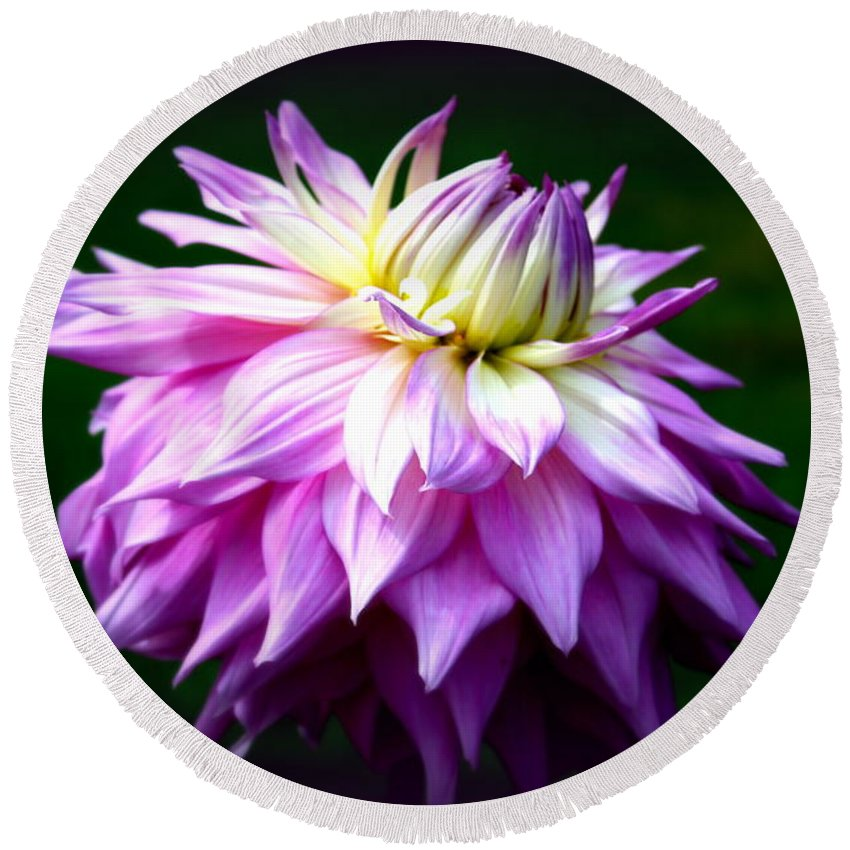 Pink Round Beach Towel featuring the photograph Lavendar Dahlia by Donna Walsh
