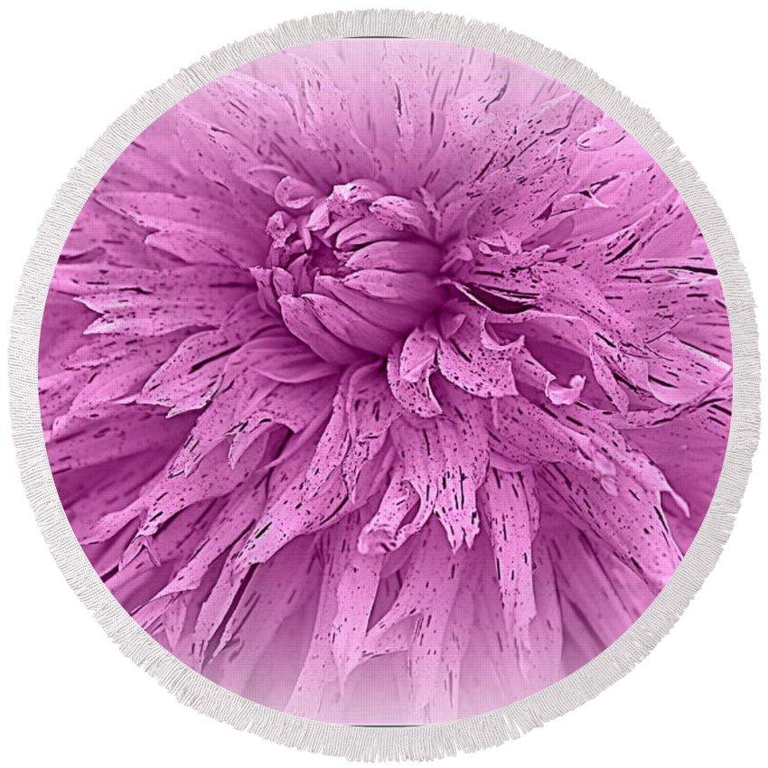 Dahlia Round Beach Towel featuring the photograph Lavender Beauty by Dora Sofia Caputo Photographic Design and Fine Art